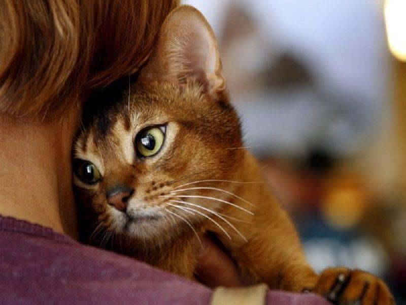Почему говорят, что нужно улыбаться людям, даже если на сердце кошки скребут?